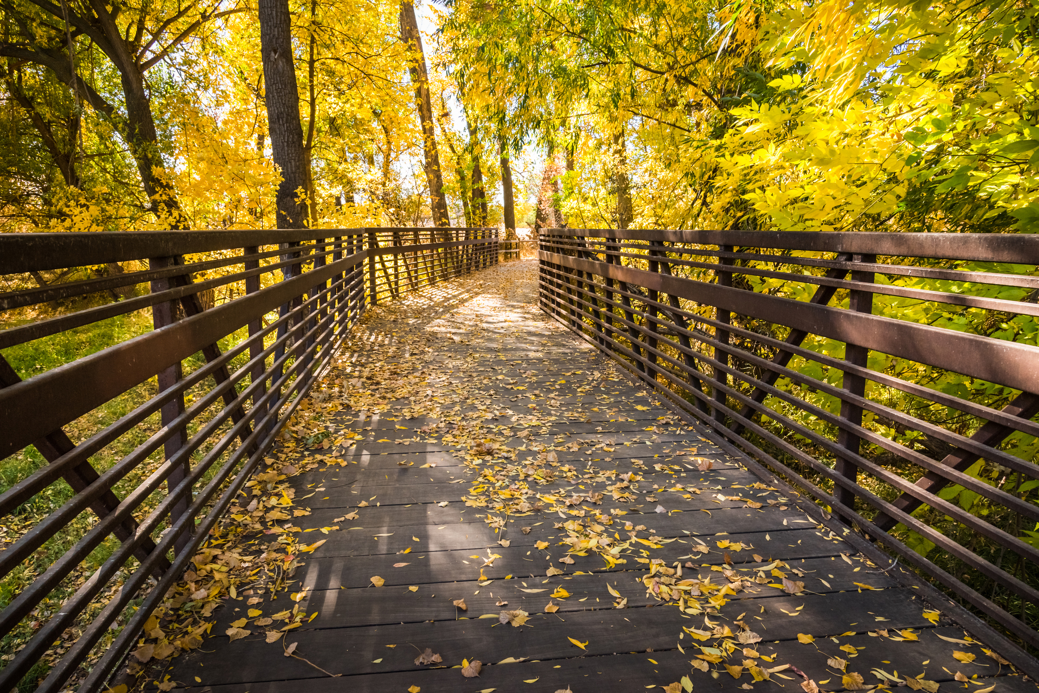 Wooden Bridge Through Autumn Woods